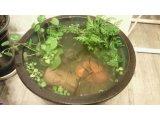 メダカの睡蓮鉢を。