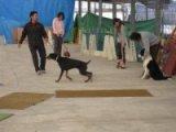 犬のお預かりしつけ訓練コース
