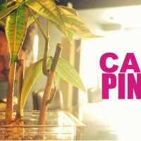 CAFE PINKS