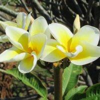 ハワイアンロミロミ MOANA
