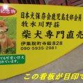 柴犬専門 牧水川野犬舎