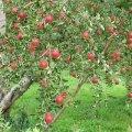 篠根果樹園