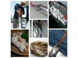 太刀魚釣りに行ってきました。