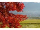 ★ 朝紅葉は光り輝いています。