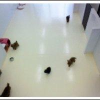 ペットホテル・トリミングサロン FREE DOGGY