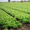 農地転用・売買許可申請支援