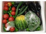 ダーツ投げ放題と新鮮野菜