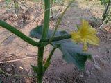 無農薬野菜の収穫が待ち遠しいですね・・・。