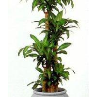 観葉植物レンタル  グリーンスタッフ