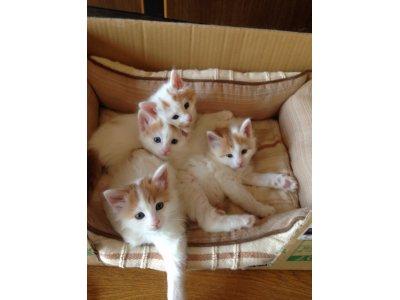 可愛い子猫4匹