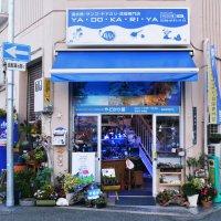 海水魚ショップ やどかり屋
