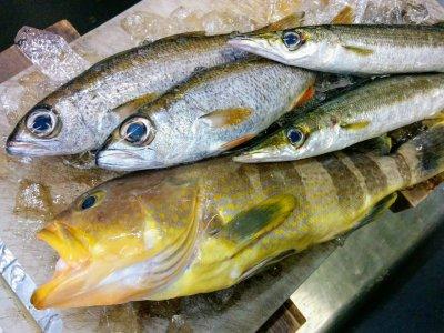 小田原で取れたて新鮮な魚!