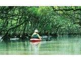 独特の離島文化と亜熱帯の森に出会う旅 奄美大島3・4・5日間