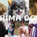 犬の美容室PRIMA DOLL(ぷりまどーる)