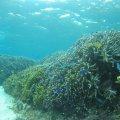 石垣島のシュノーケル専門店 さんご礁の海から
