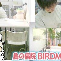 鳥の病院BIRDMORE