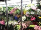 カスタマイズ花束