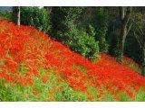 ★ 真紅の絨毯♪