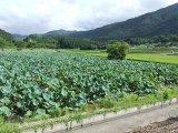 京都の穀倉地帯は田植え終了