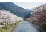 ★ 桜咲き、春の訪れに心も花咲く♪