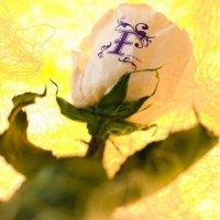 aquxya flower jewels