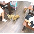 ドッグカフェ 大阪市城東区|DogCafe shop WAN WAN ccr
