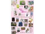 2/18(火)~3/9(日) 春まち恋する雑貨たち♪