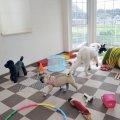 DogTrainingSchool WARABY