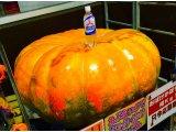 『きょうの おばけ かぼちゃ』