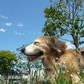出張 犬のしつけ方トレーニング ABOUT DOGS