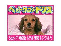 レンタル犬入会金無料券!