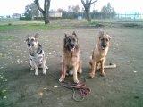 犬の家庭教師コース