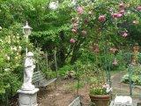 もうすぐバラが咲き始めます