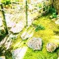 NAMICHIDORI波千鳥  茶道教室 甘味処
