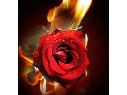 誕生日のサプライズプラン[1] /炎の中から薔薇の花・・