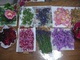 ぼっち収穫祭