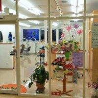 美容室ヘア-ディオン