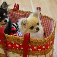 犬と遊べるカフェ ドッグテイル