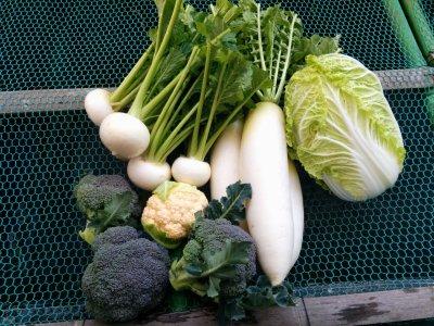 畑から仕入れる冬野菜