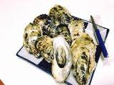 今が旬!産地直送、北海道サロマ湖産2年牡蠣。お歳暮やご贈答用にも最適。