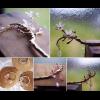 【サランキモノ市初参戦・紅桜】金の枝に桜を咲かせた簪が出来上がりました!