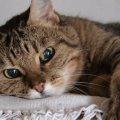 猫よし/渋谷区、目黒区、品川区 【猫専門】ペットシッター