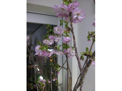 お花見シーズン到来♪