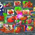 上物天然魚専門店 大盛鮮魚カツオ