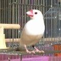 ricebirds park