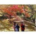 小豆島紅葉の旅を楽しむクーポン