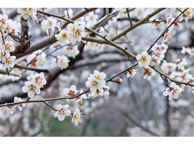 3月春ですね。