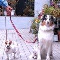「犬のようちえん」  駒沢公園教室