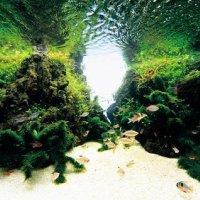 金魚 熱帯魚 水草の専門店 F&P白石