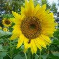 伊豆の国養蜂園